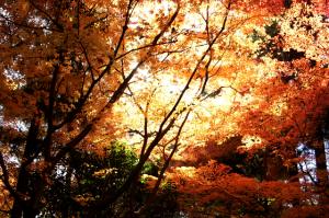 Japón en Otoño post de Nautalia