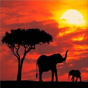 3 formas de hacer un safari en África